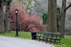 Spring in Central Park NYC 146867533