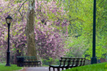 Spring in Central Park, NYC