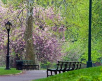 Spring in Central Park, NYC, Visa Waiver Program (VWP)