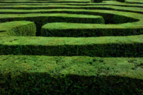Maze of Hedges 92880105