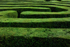 Maze of Hedges 92880105; J-1 Waiver